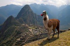 Machu Picchu (Perù) Immagine Stock