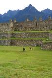 Machu Picchu, Perú Imagen de archivo libre de regalías