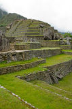 Machu Picchu, Peru. Agricultural terraces at Machu Picchu, Peru royalty free stock photos