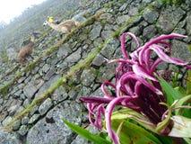 Machu Picchu, Peru Fotografering för Bildbyråer