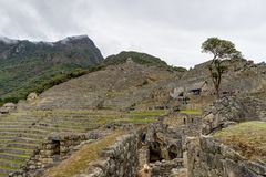 Machu Picchu in Peru Custo South America Stock Afbeelding