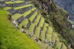 Machu Picchu Peru, jordbruks- terrasser Royaltyfri Fotografi