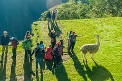Tourists watch lamas at Machu Picchu ruins stock photography