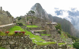 Machu Picchu in Peru. This photo is taken in Machu Pichu Heritage in Peru. Machu Picchu stands 2,430 m above sea-level, in the middle of a tropical mountain Royalty Free Stock Images