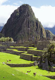 Machu Picchu (Peru, Southa America). A UNESCO World Heritage Royalty Free Stock Images