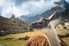 Machu Picchu, site de patrimoine mondial de l'UNESCO Images stock