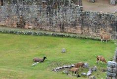 Machu Picchu Stonework Stock Photography