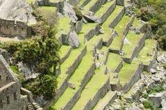 Machu Picchu Stromi tarasy - Peru Fotografia Royalty Free