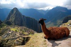 Machu Picchu und der Lama stockbild