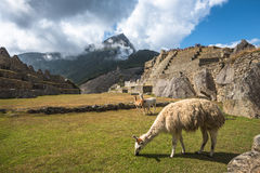 Machu Picchu, UNESCO World Heritage Site Royalty Free Stock Photos