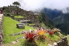 Machu Pichu стоковые фото