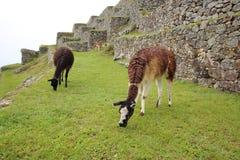 Machu Pichu photo stock