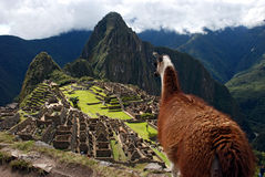 Free Machu Pichu Royalty Free Stock Images - 6108429