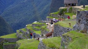 Machu Pichu and the adventure getting there. Through the trekking of Salkantay stock video footage
