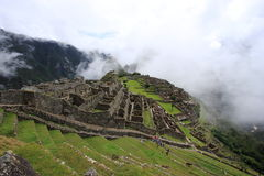 Machu Pichu. Perù america sud history inca cuzco lama  green Royalty Free Stock Photos