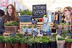 Macierzanka, basil, mennica w garnkach w gablocie wystawowej na kwiatu rynku Zdjęcia Royalty Free