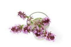 Macierzanka, Thymus kwiat w szkle Fotografia Stock