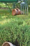 Macierzanki i ogrodnictwa narzędzia Fotografia Royalty Free