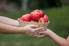 Macierzysta średniorolna ręka daje koszowi jabłka małe dziecko dziewczyna Zdjęcia Stock