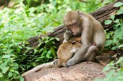 Macierzysta i mała dziecko małpa obrazy royalty free