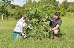 Macierzystego nauczania dorosły syn zasadza nowej opieki i drzewa fotografia royalty free