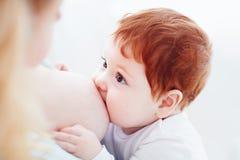 Macierzysty breastfeeding jej uroczego imbirowego dziecka Dzieci spojrzenia przy mamą, spaja pojęcie Zdjęcie Royalty Free