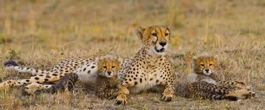 Macierzysty gepard i jej lisiątka w sawannie Kenja Tanzania africa Park Narodowy kmieć Maasai Mara zdjęcie stock