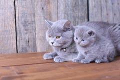 Macierzysty kot bierze opiece ona figlarki Zdjęcie Stock