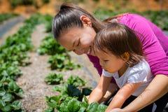 Macierzysty nauczanie jej dziecko dlaczego rosnąć rośliny i veggies w ogródzie Dźwiganie i czułość dla organicznie gospodarstwa r zdjęcia stock