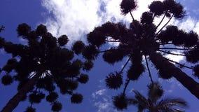 Macierzysty ` s drzewo życie Zdjęcia Stock