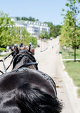 Macinac Island Horse Carriage to Grand Hotel. A shot looking out from the front of a carriage ride in Macinac Island as we approach the Grand Hotel Stock Photo