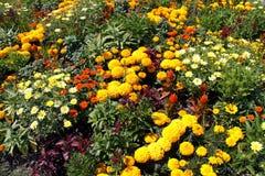 Macizo de flores Imagen de archivo libre de regalías