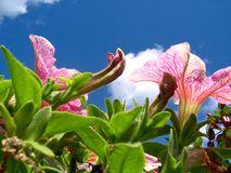 Macizo de flores Imágenes de archivo libres de regalías