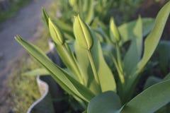 Macizo de flores cercado Foto de archivo libre de regalías