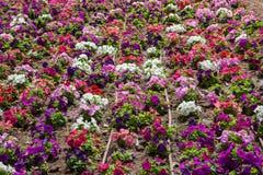 Macizo de flores coloreado Fotos de archivo
