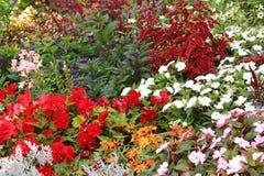 Macizo de flores coloreado multi, gran variedad de flores Foto de archivo libre de regalías