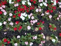 Macizo de flores colorido Imagen de archivo