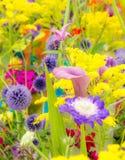 Macizo de flores con las diversas flores del verano Fotografía de archivo libre de regalías