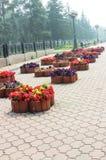 Macizo de flores con las flores Imagen de archivo