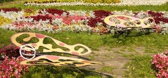 Macizo de flores con las mariposas Foto de archivo