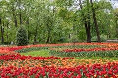 Macizo de flores con los tulipanes en parque de la primavera en la isla de Elagin en St Petersburg Fotos de archivo libres de regalías