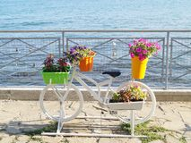 Macizo de flores de la bicicleta Imagen de archivo