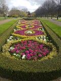 Macizo de flores de la primavera Foto de archivo libre de regalías