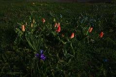 Macizo de flores de la primavera fotografía de archivo libre de regalías