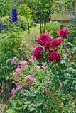Macizo de flores de rosas en el jardín Fotos de archivo