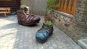 Macizo de flores decorativo dos estilizado como zapato viejo Fotografía de archivo libre de regalías
