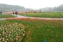 Macizo de flores en jardín botánico imagen de archivo libre de regalías