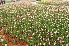 Macizo de flores en jardín botánico imagenes de archivo