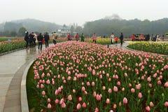 Macizo de flores en jardín botánico fotos de archivo