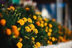 Macizo de flores en la calle foto de archivo libre de regalías